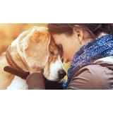 Cremaciones De Mascotas, Retiro A Domicilio