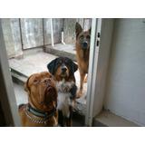 Guardería Canina, Adiestramiento, Paseos Recreativos