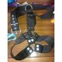 Arnes Cinturon De Seguridad Para Perros , Accesorios Apolo