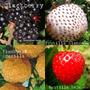 Combo Semillas Frutos Patagónicos. 12 Variedades Muy Ricas!