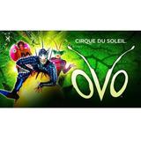 Cirque Du Soleil Ovo Gold Later A
