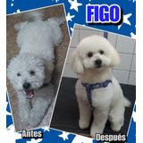 Peluquería Canina Promo H/fin De Mes -  Siempre Fiel (local)