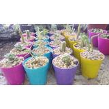 Crasas Y Cactus Good God, Souvenirs En Maceta De 6. 16$ C/u