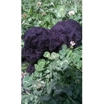 Hermoso Cachorro Caniche Mini Toy Negro