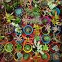 Cactus Y Suculentas - Combo 10 Unidades- Souvenir