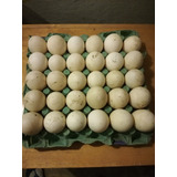 Huevos Para Incubar Fertiles De Pato Pekin Y Marrueco