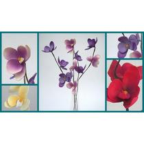 3 Varas De Orquídeas En Bellos Diseños Y Colores