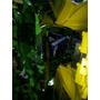 Plasticos De Panther 110