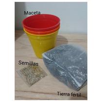 Kit Hierba Gatera Maceta Tierra Semillas,para Gatos Y Perros