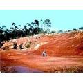 Tierra De Misiones. Plantas Acuáticas -envíos-local-acuario-