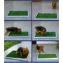 Alfombra Sanitaria Perros Cachorro 50x50 Oferta Local/once
