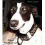 Collar-martingale Para Perros-galgos Rústico Pampa