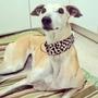 Collar-martingale Para Perros-galgos En Tapiceria