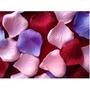 144 Pétalos De Rosas Tela Flores Eventos Decoración Souvenir
