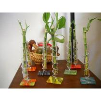 Vara De Bambú Con Base De Vitrofusion