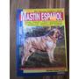 Mastin Español. Salvador Gomez-toldra. Perros