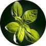 Aceite Esencial Natural De Albahaca X 100ml Puro