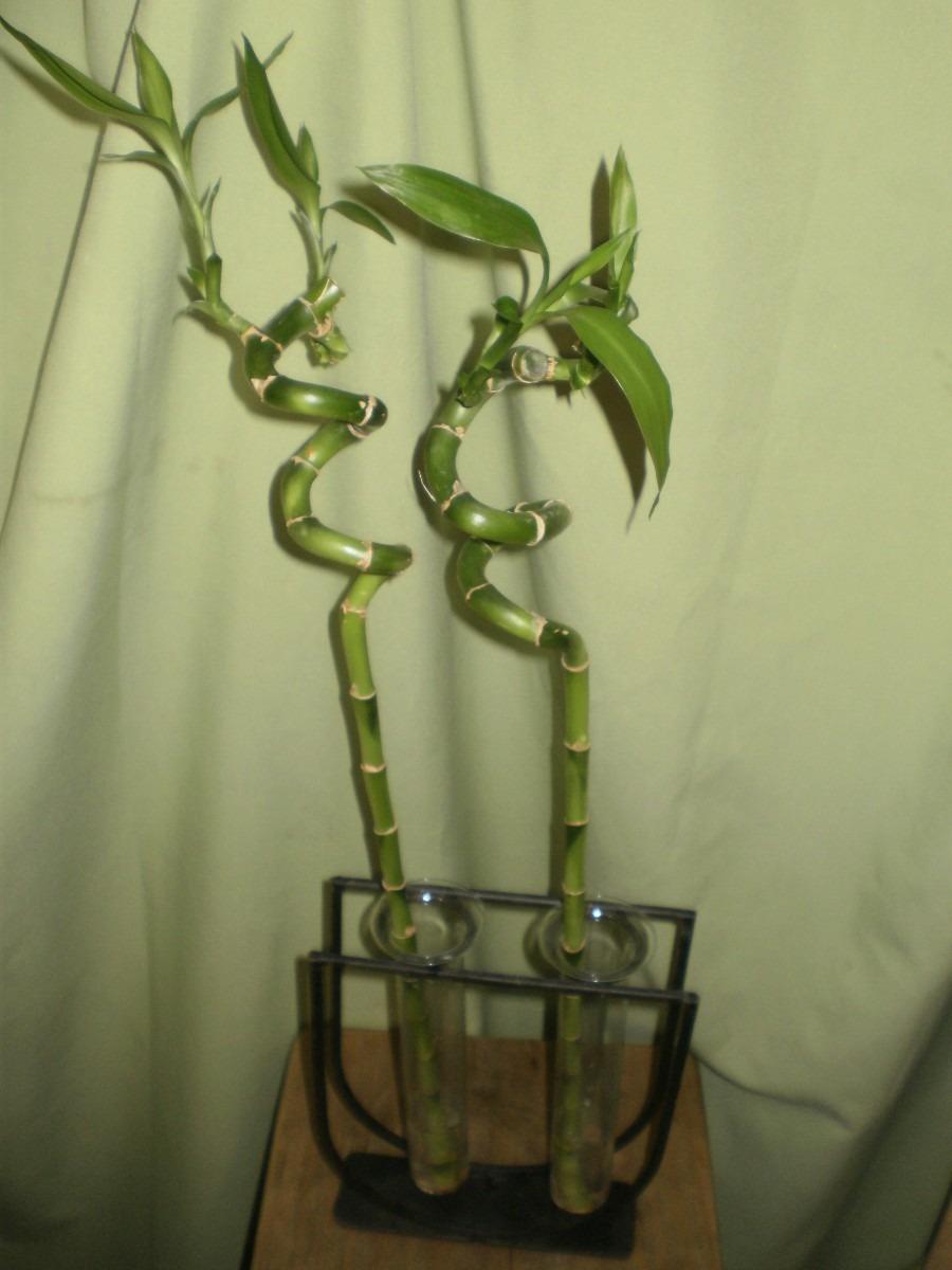 Decorar con bamb de la suerte plantas plantas de interior - Cana bambu decoracion ...