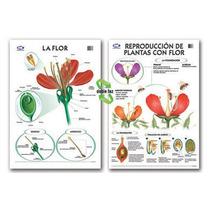 Rotafolio Botánica 7 Hojas Con 14 Láminas P/fibrón