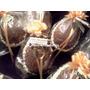 Huevo De Pascua N11 150 Grs Chocolate Gourmet Con Confites