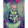 Huevo De Pascua.artesanales! Grandes!! 2016 Efect.
