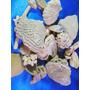 El Arcon Lote De 31 Cochas Ostras Ycorales Coleccion 14058