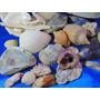 El Arcon Lote De 25 Caracoles Marinos De Coleccion 14062