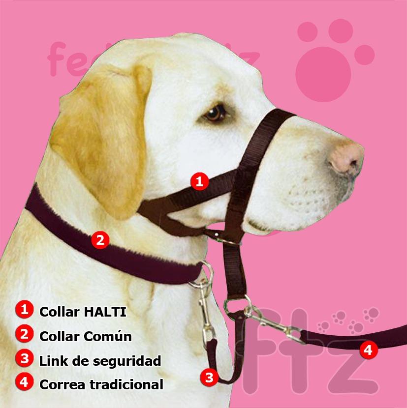 halti collar: