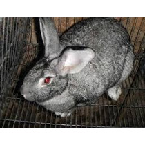 Reproductores De Conejos