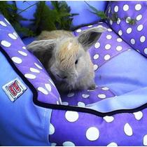Conejos Orejas Caidas Holland Lop Enanos