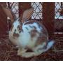 Conejos Bebes Mascotas Muy Vistosos ¡¡¡