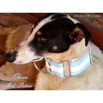 Collar-martingale De Argentina-mundial Para Perros-galgos