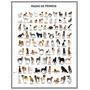 Razas De Perros Animales En Tela Canvas 90x70 Cm Exelente