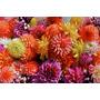 Muy Buen Cuadro De Flores Impreso En Tela En Canvas 95x63