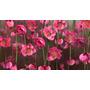 Canvas Bastidor Flores Medida 70 X 40 Cm