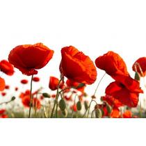 Flores Amapolas Bastidor En 100x60 Cm Mas Envio Gratis Caba.