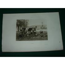Grabado Antiguo Francia Vacas Dupre Prairie Campo Rural