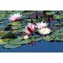 La Mejores Imágenes Impresas En Tela Canvas 70x40