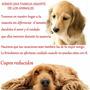 Guarderia Y Hospedaje Canino Nuestros Peques Todo El Año.