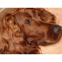Pensionado Guarderia Y Paseo Canino