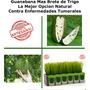 Mix De Brote De Trigo Y Guanabana 60 Unidades Para Un Mes