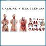 Torso Humano Bisexo 85cm Educacion Medicina Didactica