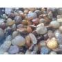 Piedras Naturales Decoración Jarrones Cactus Canto Rodado