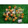 Luces Navideñas Frutas Naranja Kawaii Arbolito Adornos Deco