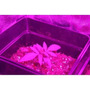 Panel Led 200w Cultivo Interior Indoor Crecimiento-floración