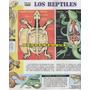 2 Laminas Anteojito Los Reptiles + Ciclo Del Nitrogeno En La