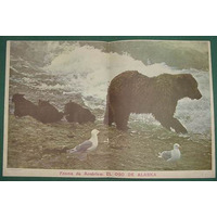 Lamina Billiken Fauna America Oso Alaska Historieta Ardillin