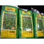 Semilla Cesped Bermuda Grass Guasch X 1kgr O 70m2