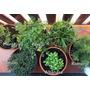 Manual De Plantas Aromáticas Y Medicinales + Envío Gratis