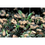 Kits Cultivo Completo Plantas Carnivoras - Bonsai - Cactus